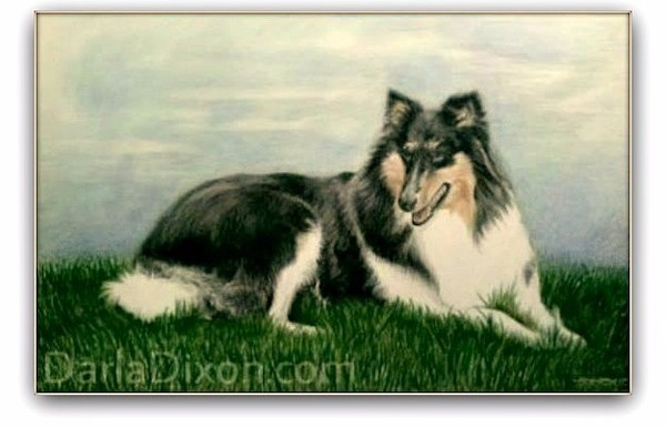Portrait of a Collie Dog