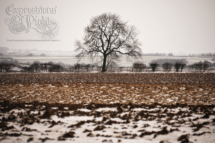 ExpoLight-The-Lincolnshire-Wolds-Winter-18-03-2018-0039 (SP)