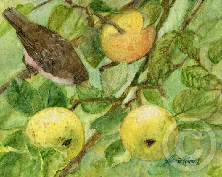 Bird and Apples