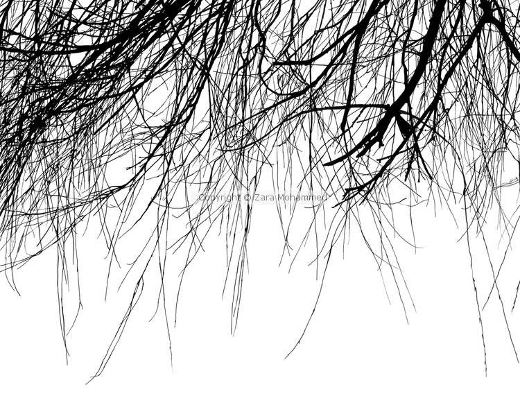 Wispy Tree Branches