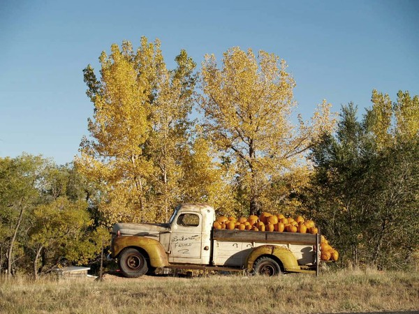The Pumpkin Truck