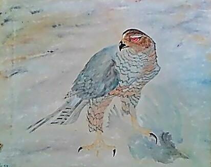 Desert Hawk in dreams