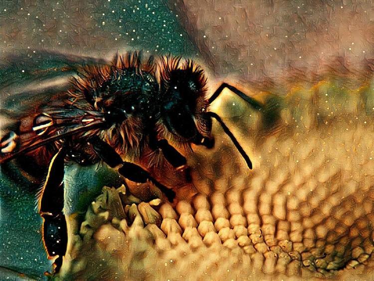 Bewitching Buzz