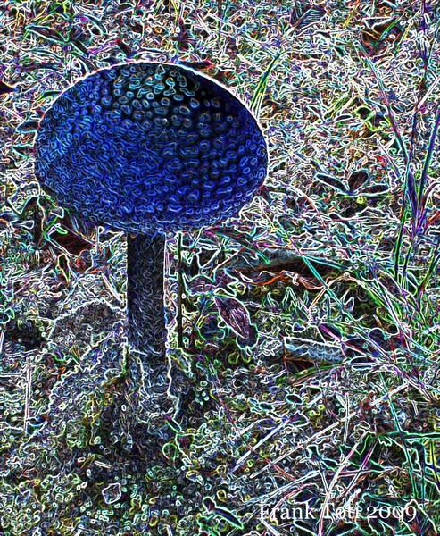 abstract shroom