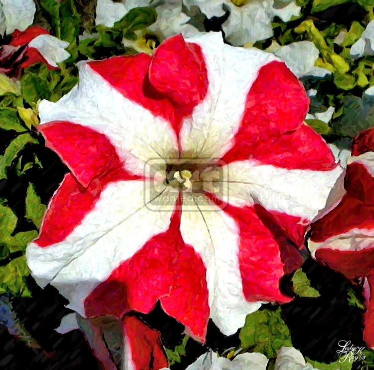 Peppermint Petunia