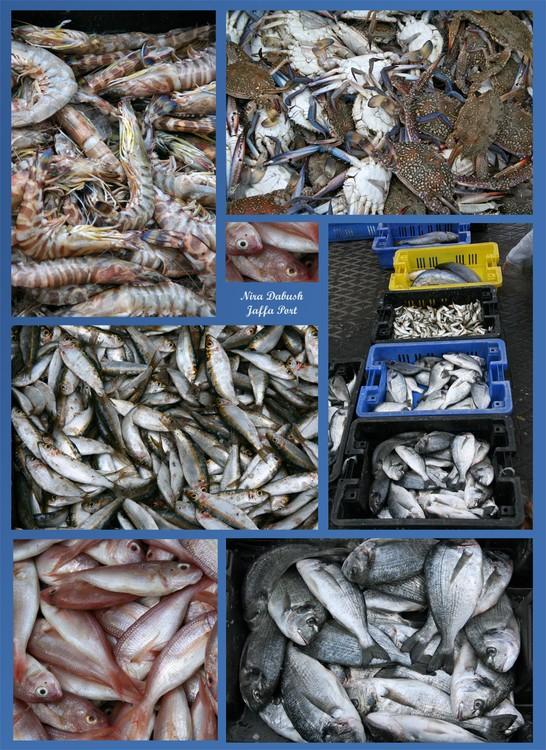 Fish & More in Jaffa Port