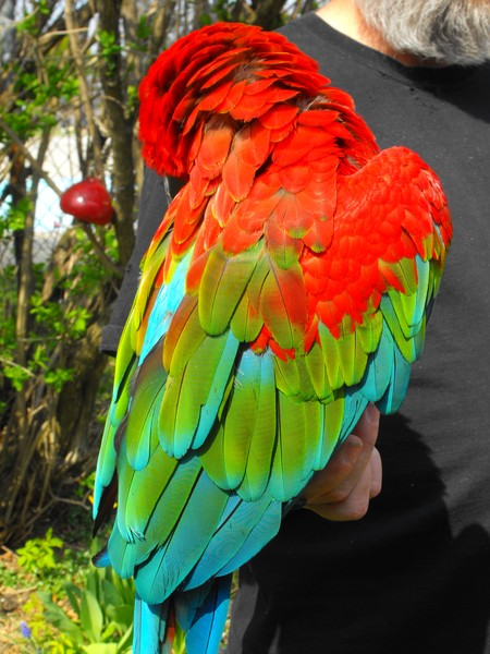 macaw of another colour