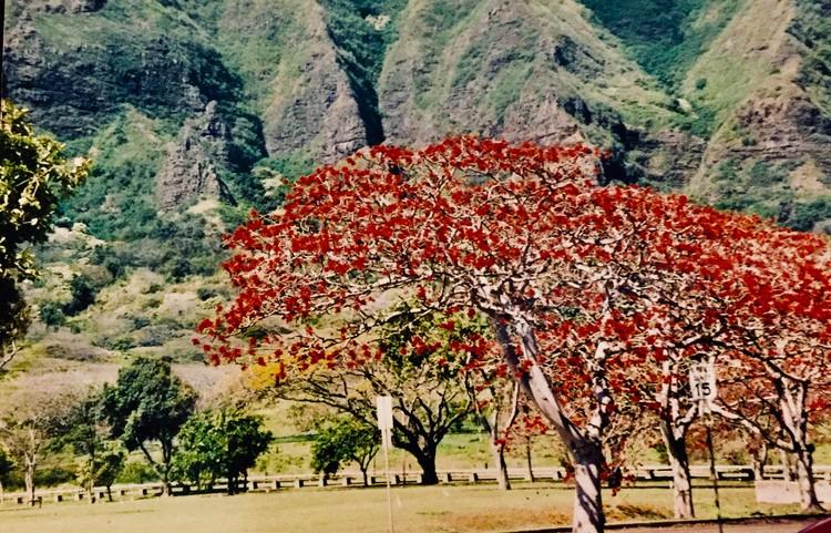 Tree Bloom