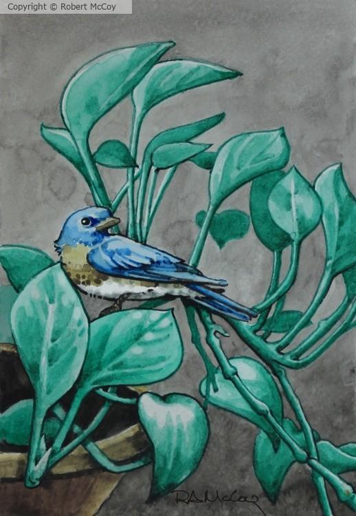 Bluebird Plant