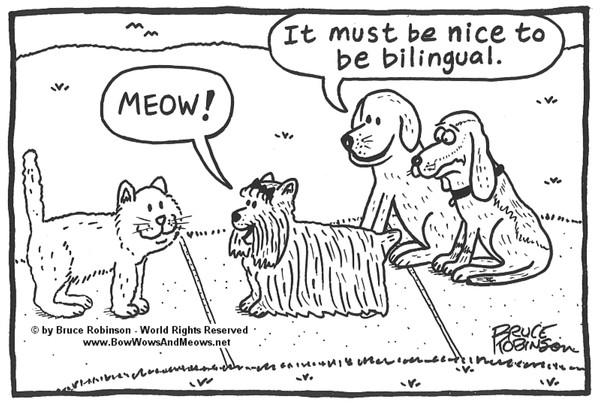 BOW WOWS & MEOWS® DOG Cartoon -