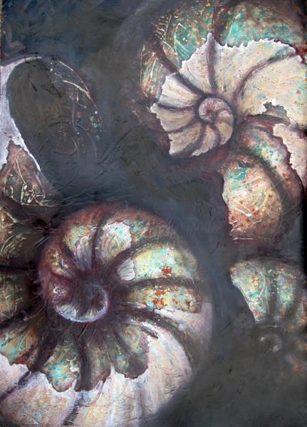 ammonite on black   6 by jo sheppard