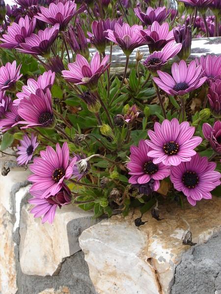 Israel Flowers 5