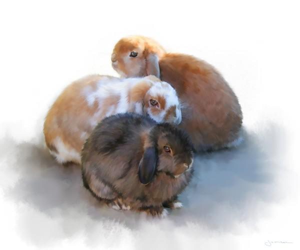 Bunny Huddle