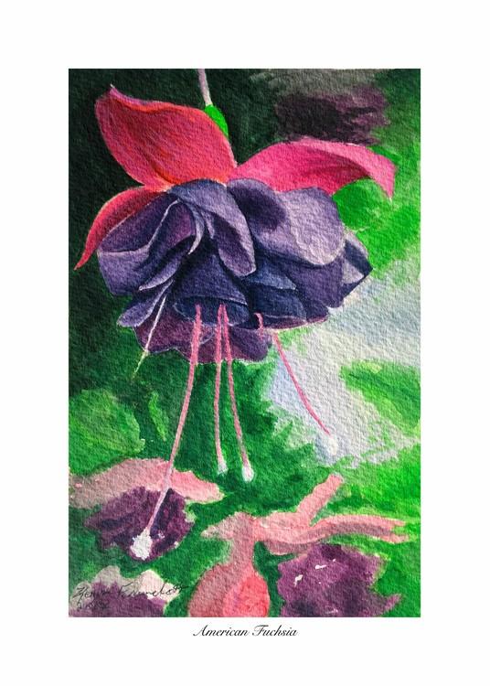 American Fuchsia