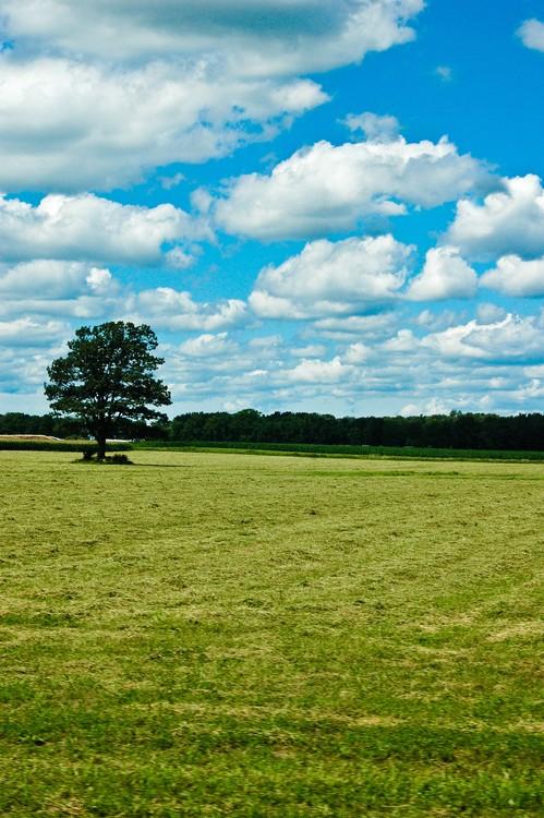 Country Horizon 1