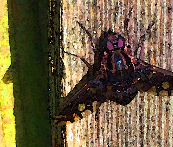 Tiger Bee Fly 1