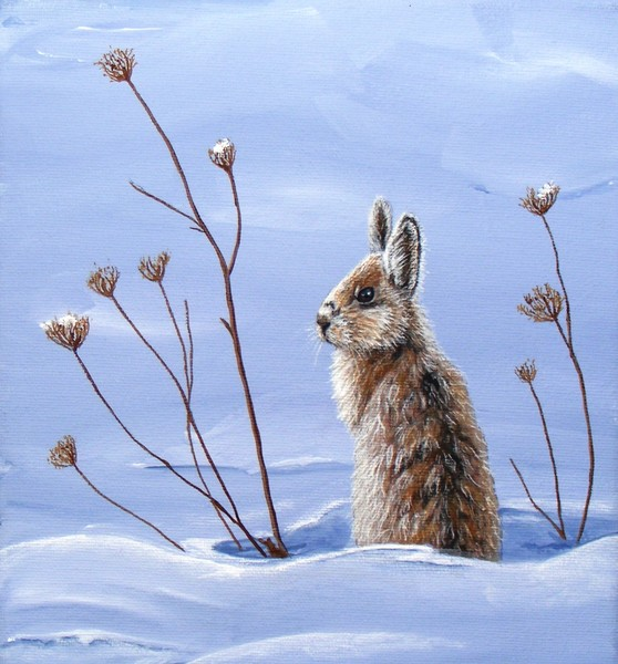 Snowy Paws