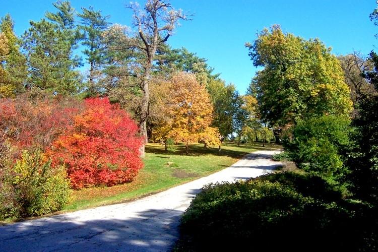 Colored Autumn