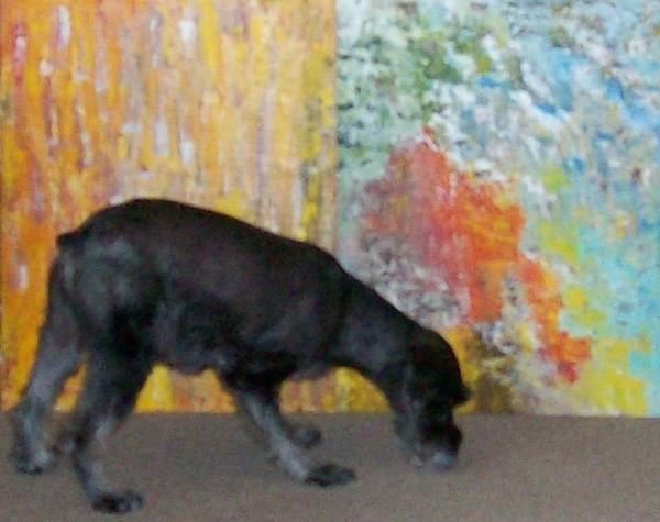 Abstracts And The Animal 1