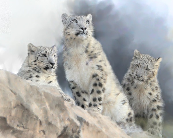 Snow Leopard Family (Seeing Spots Collection)