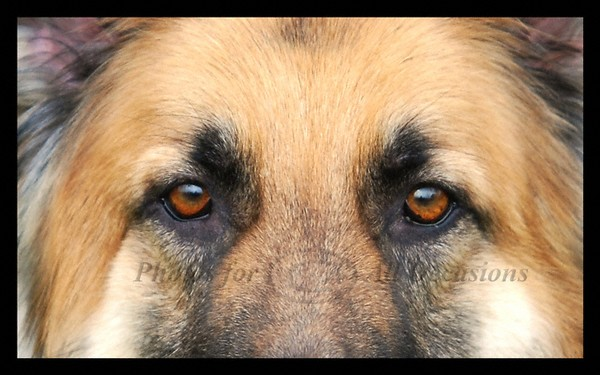 Eyes of Kane