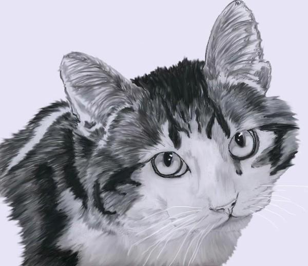 Corky the Kitty