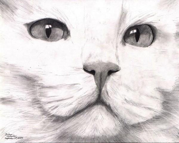 Angora Cat For Sale