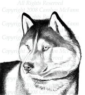 Siberian Husky Sketch By Carolyn Mcfann Artwanted Com