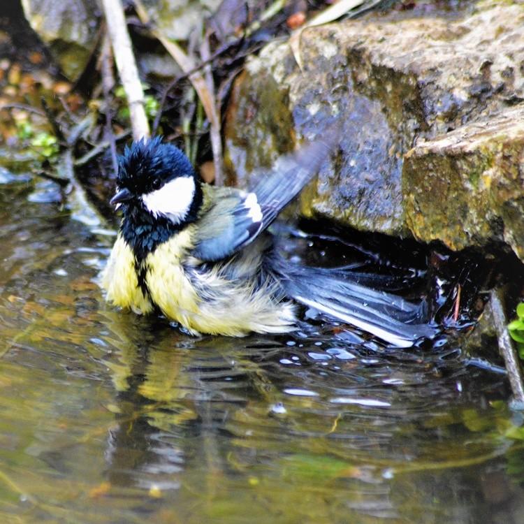 TIT ENJOYING A BATH ..
