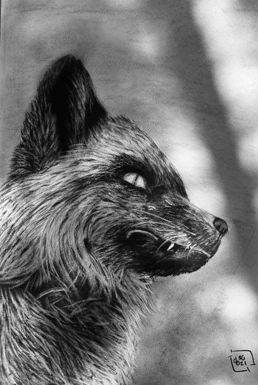 Snaggle Fox
