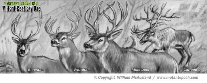 Common Deer 1