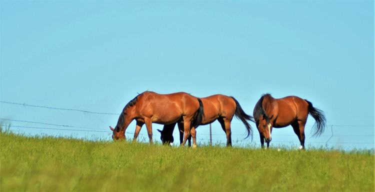 Sleek Horses