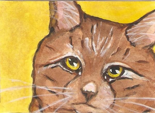 tabby on yellow