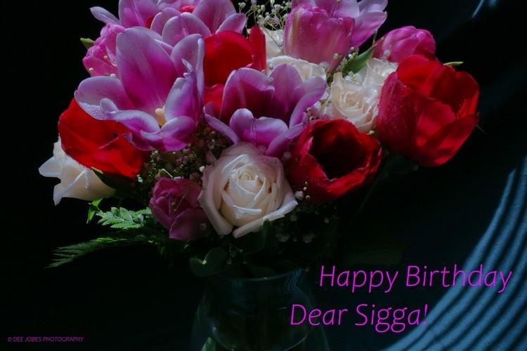 Happy Birthday Sigga!
