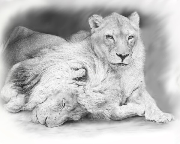 Growing Old Together (Lion Eyes Collection)