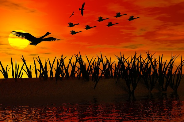 Ducks Flying At Sunset By William Ballester Artwanted Com