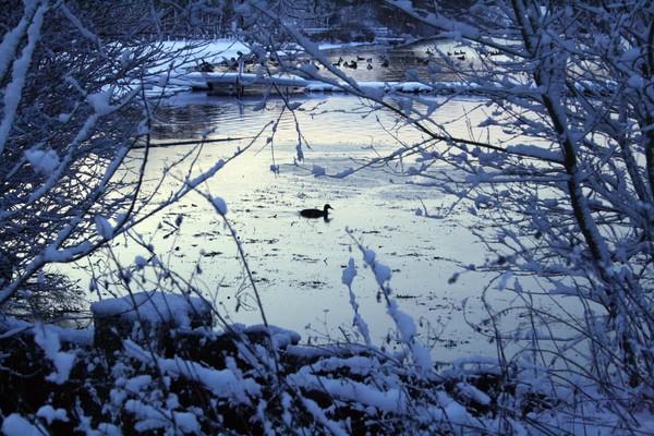 Frozen Lands 2