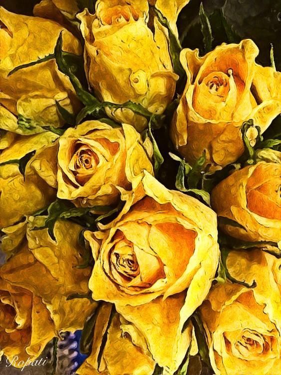 Shop Front Roses