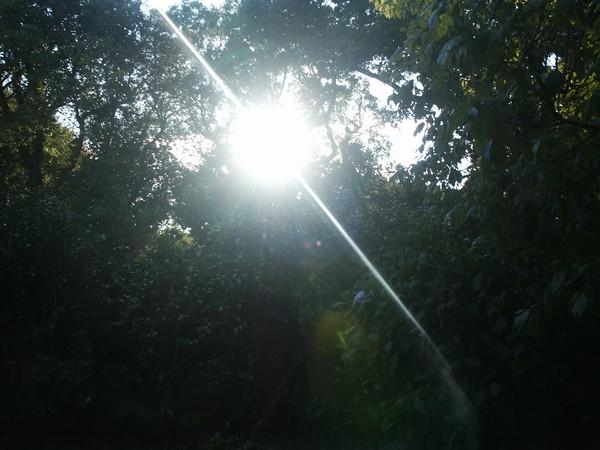 SUN BRIGHT LIGHT *