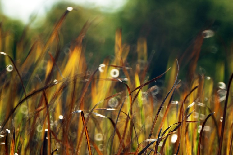 Flames of Grass Color Photo