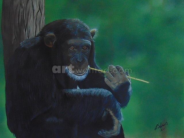 Chillin' Chimp