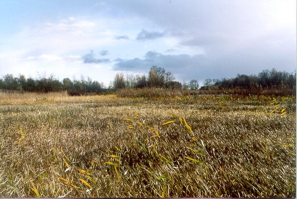 Skyblue Grass