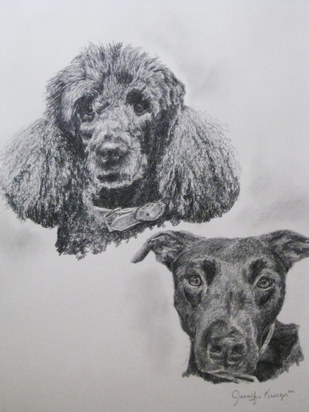 Poodle and Lab
