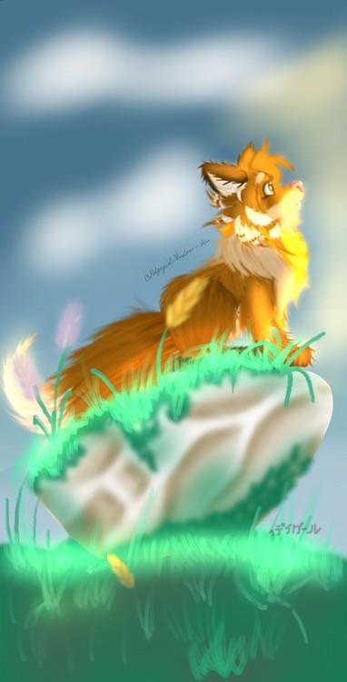 foxy camm
