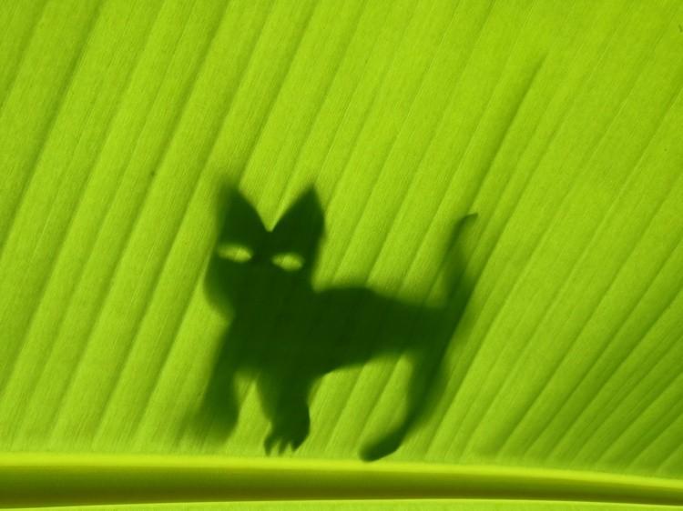 A Cat on a Leaf