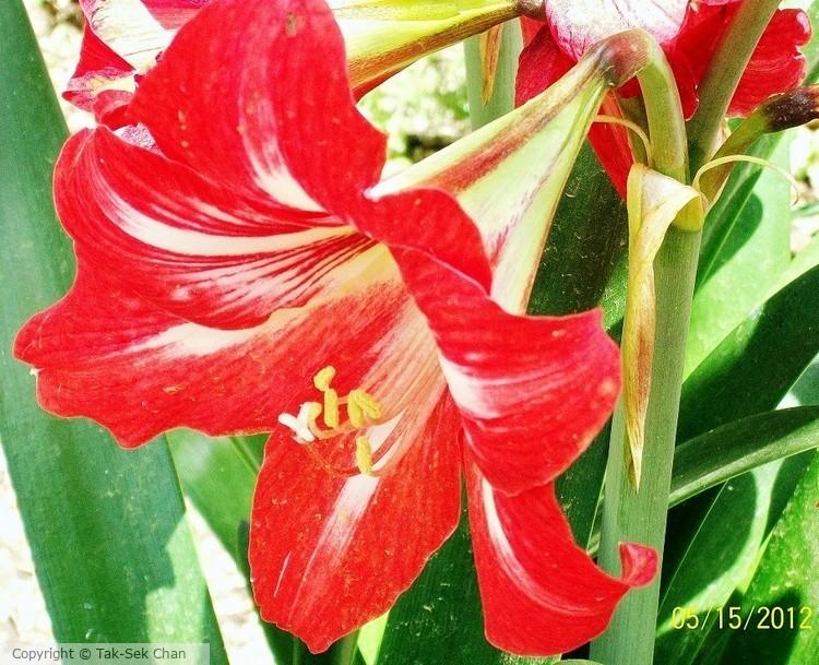Lily, Pamukkale 05-15-2012