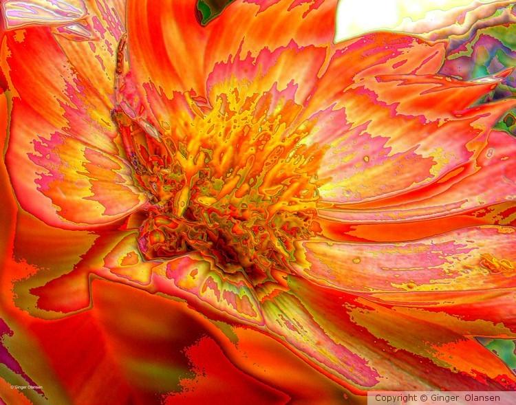 Floral Orange in Digital
