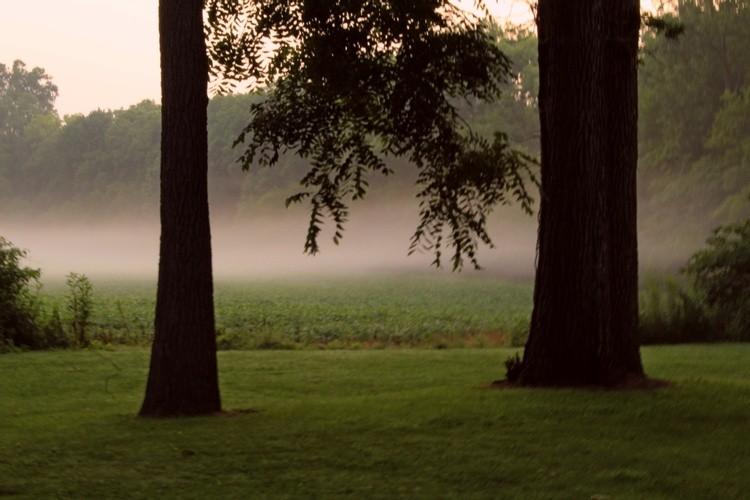 Mist beyond the trees