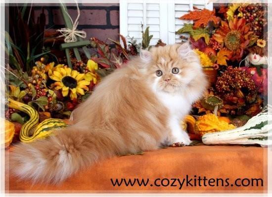 Sunflowers & Kittens