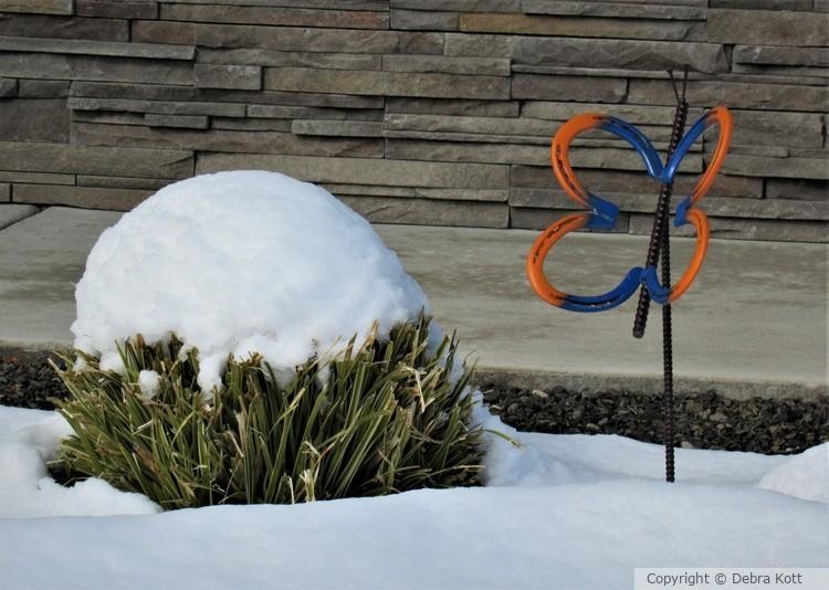 Snow Cap Shrub